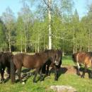 Familjedag på Kvarnabacken